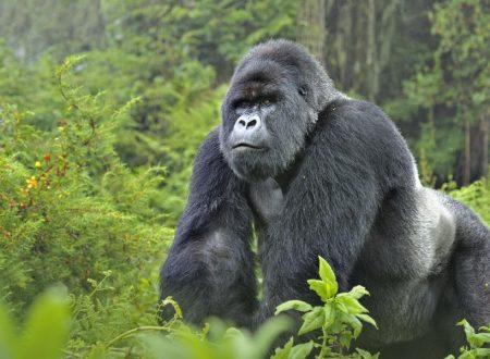 Congo 1 – Le origini
