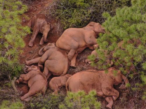 Gli elefanti stanchi dello Yunnan (Cina)